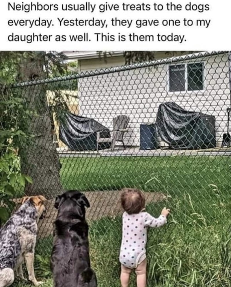 Dog - Neighbors usually give treats to the dogs everyday. Yesterday, they gave one to my daughter as well. This is them today.