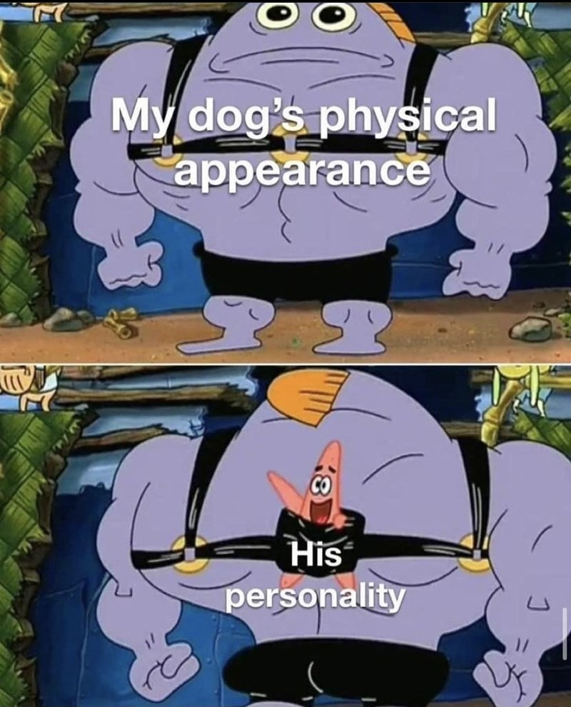 Cartoon - My dog's physical appearance CO His personality