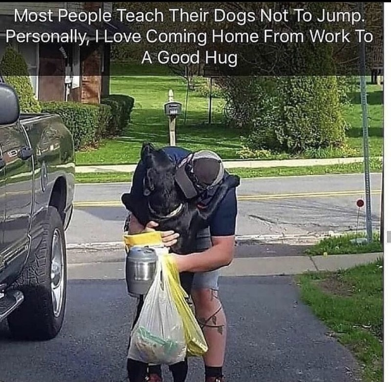 Wheel - Most People Teach Their Dogs Not To Jump. Personally, I Love Coming Home From Work To A Good Hug