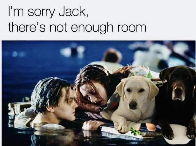 Dog - I'm sorry Jack, there's not enough room