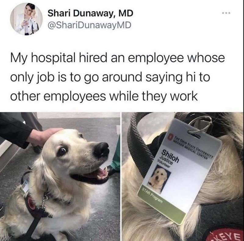 Dog - Shari Dunaway, MD @ShariDunawayMD only job is to go around saying hi to other employees while they work My hospital hired an employee whose TwE ORIO STAE UNIVERSITT WEXNER MEDICAL CENTER Shiloh Justice Volunteer STAR Program LEYE