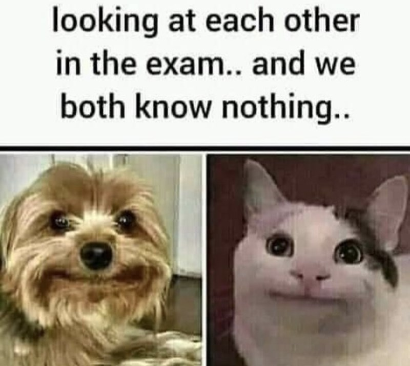 Dog - looking at each other in the exam.. and we both know nothing..