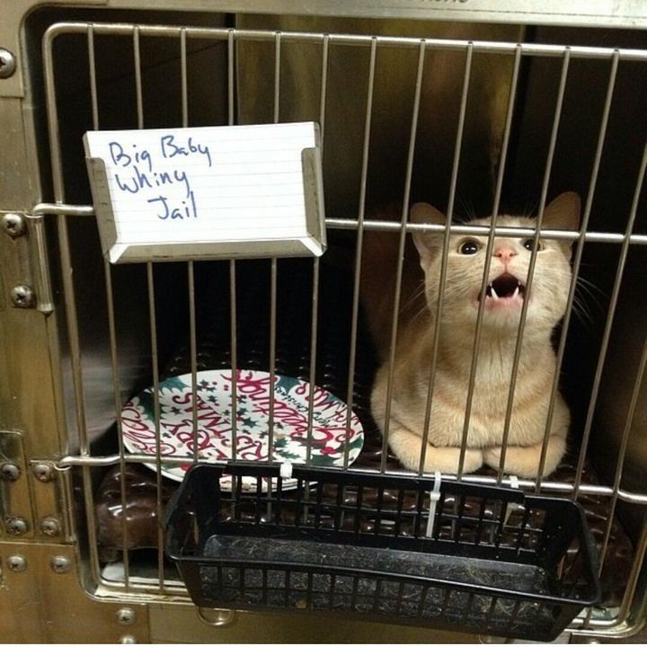 Cat - Big Baby whing Jail