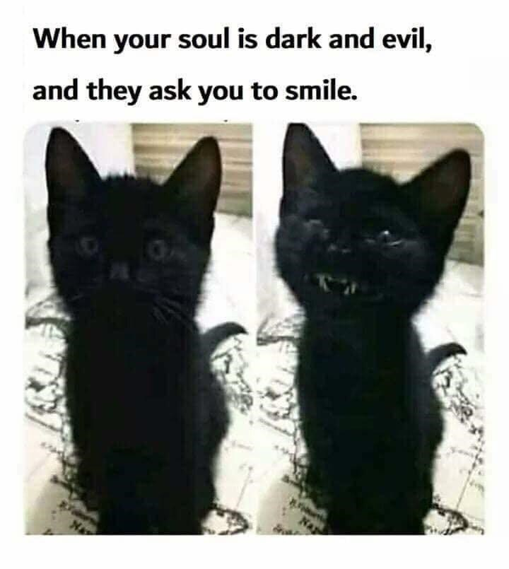 Cat - When your soul is dark and evil, and they ask you to smile.