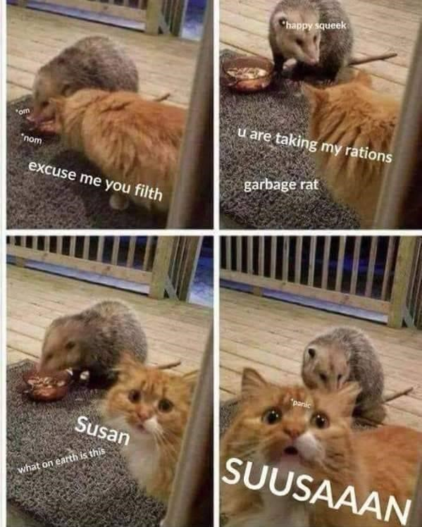 "Vertebrate - happy squeek u are taking my rations ""om nom excuse me you filth garbage rat ""panic Susan SUUSAAAN what on earth is this"