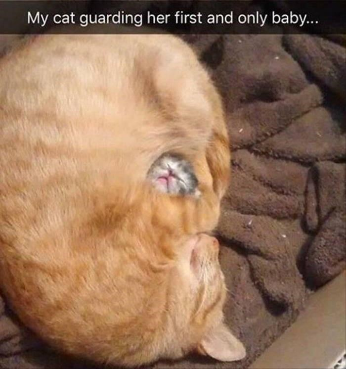 Carnivore - My cat guarding her first and only baby...