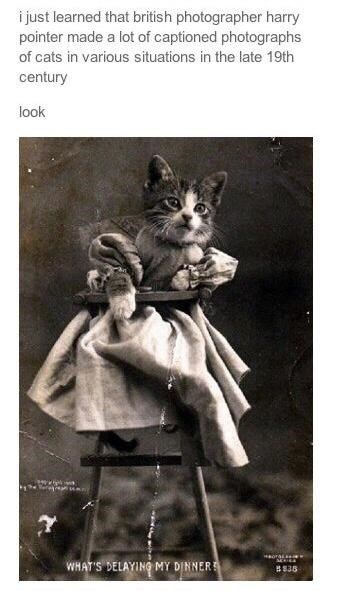 Cat - i just learned that british photographer harry pointer made a lot of captioned photographs of cats in various situations in the late 19th century look ora WHAT'S DELAYING MY DINNER