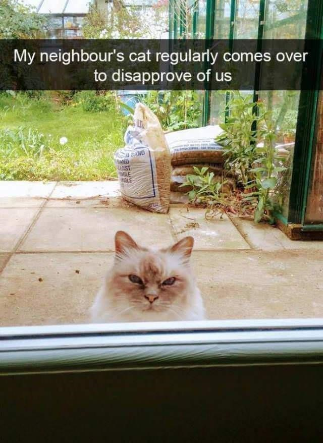 Plant - My neighbour's cat regularly comes over to disapprove of us U SAND SAND UAST GAE