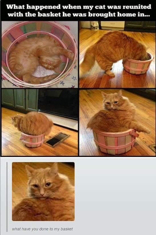 Food - What happened when my cat was reunited with the basket he was brought home in... what have you done to my basket