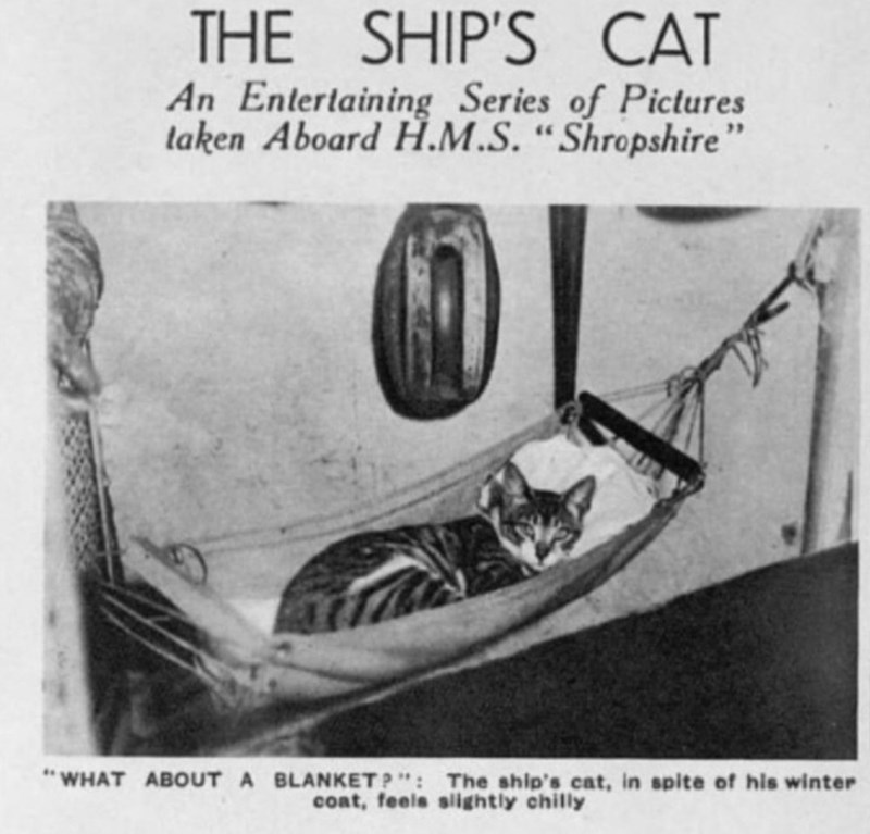 """Motor vehicle - THE SHIP'S CAT An Entertaining Series of Pictures laken Aboard H.M.S. """"Shropshire"""" 16 WHAT ABOUT A BLANKET P"""": The ship's cat, in spite of his winter cont, feels slightly chilly"""