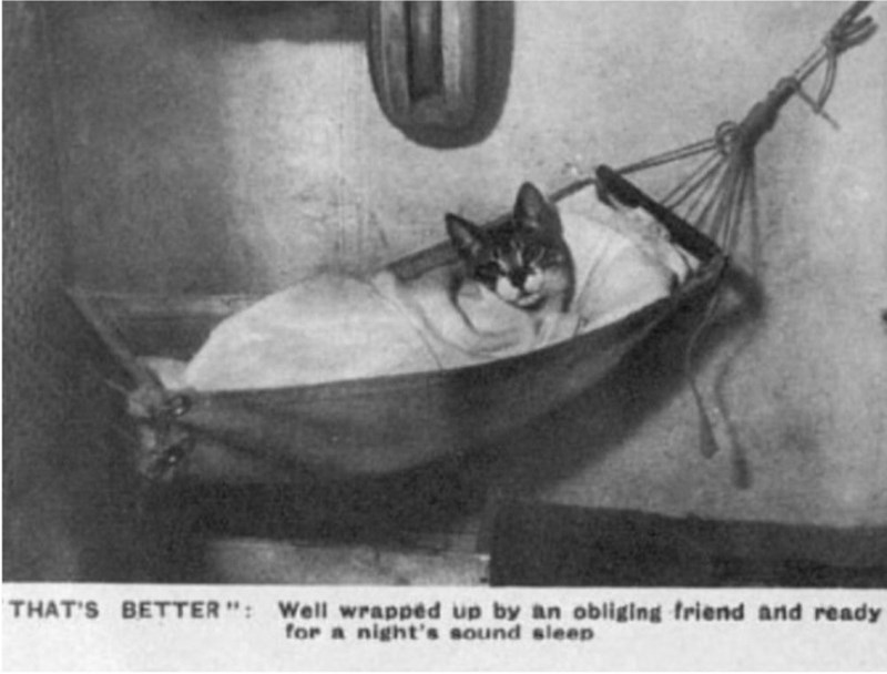 """Boat - THAT'S BETTER"""": Well wrapped up by an obliging friend and ready for a night's sound sleep"""