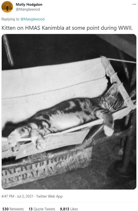 Photograph - Molly Hodgdon @Manglewood ... Replying to @Manglewood Kitten on HMAS Kanimbla at some point during WWII. 4:47 PM Jul 2, 2021 - Twitter Web App 530 Retweets 13 Quote Tweets 9,813 Likes