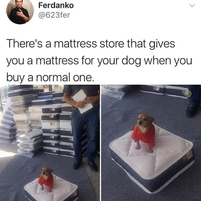Product - Ferdanko @623fer There's a mattress store that gives you a mattress for your dog when you buy a normal one. >