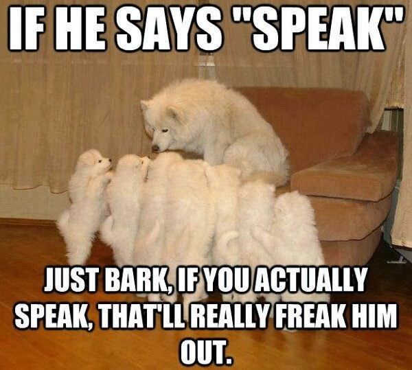 """Dog breed - IF HE SAYS """"SPEAK"""" JUST BARK, IF YOU ACTUALLY SPEAK, THAT LL REALLY FREAK HIM OUT."""