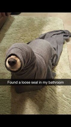 Hand - Found a loose seal in my bathroom