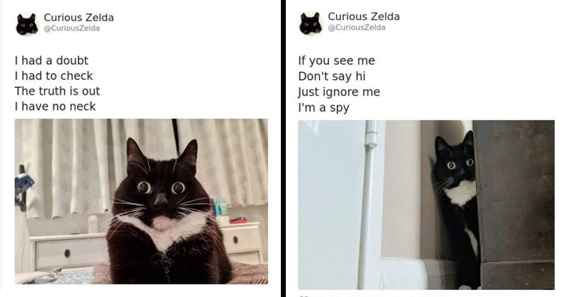 Funny and cute cat poetry tweets from Twitter account called 'Curious Zelda'