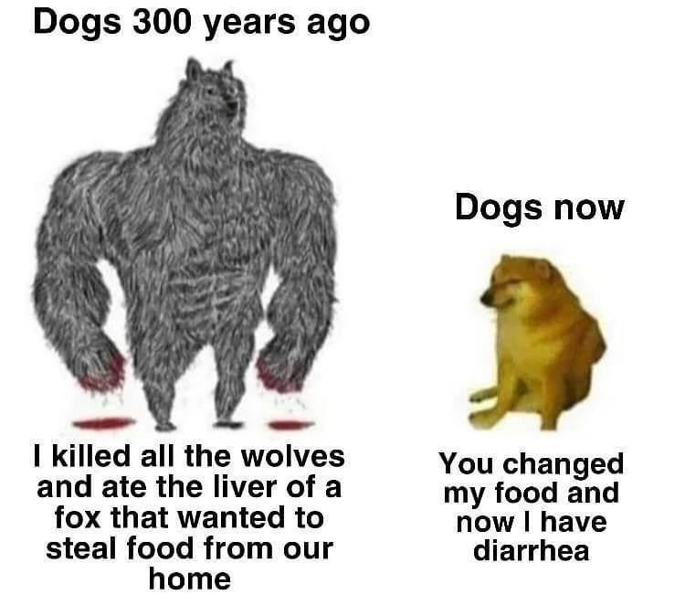 Vertebrate - Dogs 300 years ago Dogs now I killed all the wolves and ate the liver of a fox that wanted to steal food from our home You changed my food and now I have diarrhea