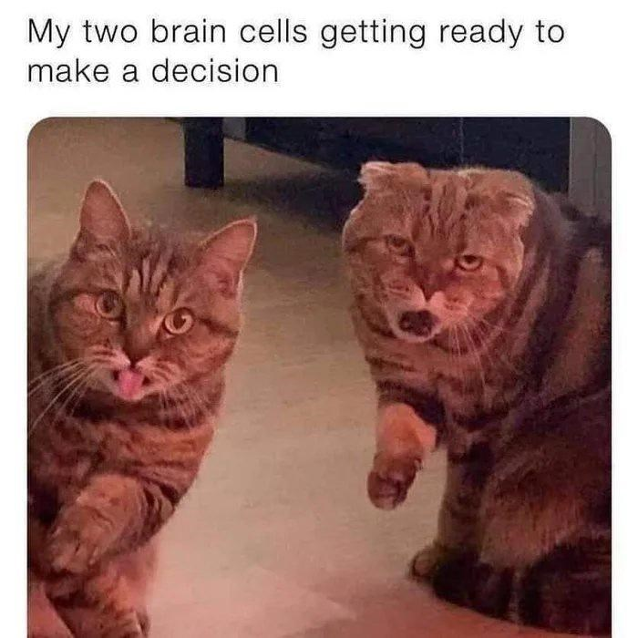 Cat - My two brain cells getting ready to make a decision