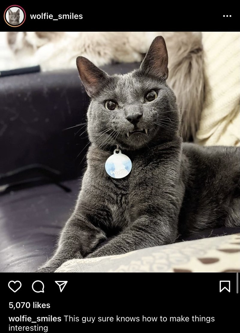 Cat - wolfie_smiles 5,070 likes wolfie_smiles This guy sure knows how to make things interesting :