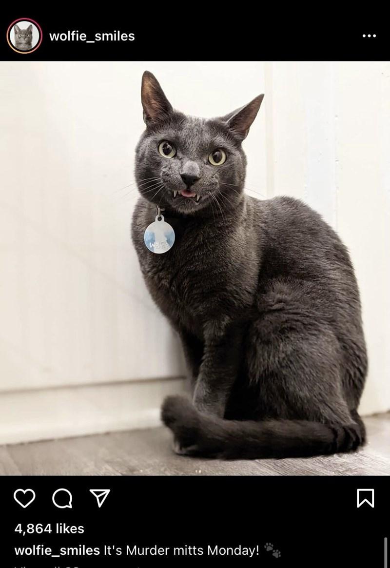Cat - wolfie_smiles 4,864 likes   wolfie_smiles It's Murder mitts Monday! :