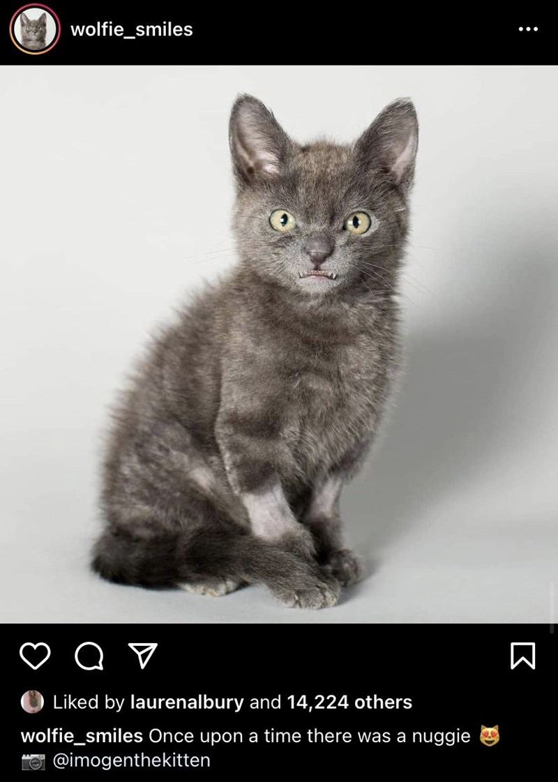 Cat - wolfie_smiles Liked by laurenalbury and 14,224 others wolfie_smiles Once upon a time there was a nuggie O @imogenthekitten