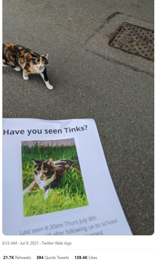 Photograph - Have you seen Tinks? Last seen 8:30am Thurs July 8th 6:13 AM - Jul 9, 2021 - Twitter Web App after following us to school. ed 21.7K Retweets 394 Quote Tweets 139.4K Likes