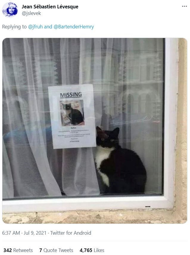 Cat - Jean Sébastien Lévesque @jslevek ... Replying to @jfruh and @BartenderHemry MISSING 6:37 AM Jul 9, 2021 · Twitter for Android 342 Retweets 7Quote Tweets 4,765 Likes