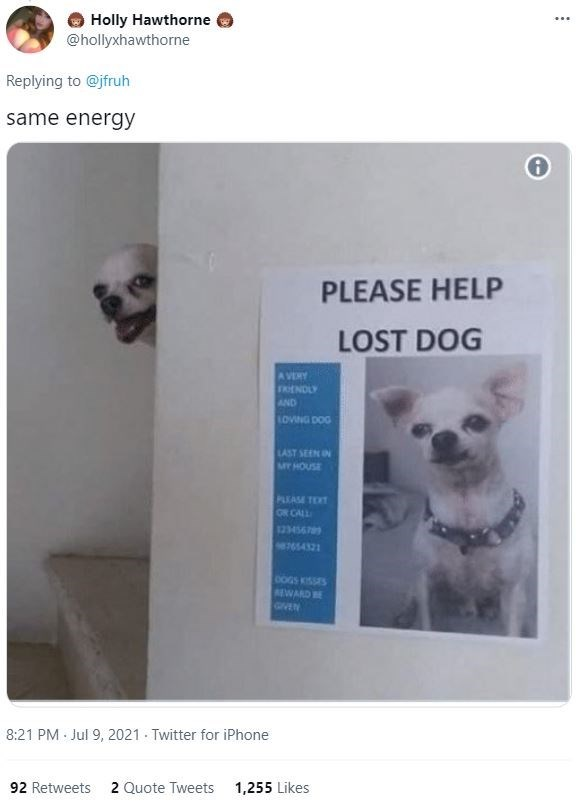 Dog - Holly Hawthorne @hollyxhawthorne ... Replying to @jfruh same energy PLEASE HELP LOST DOG A VERY FRENDLY AND LOVING DOG LAST SEEN IN MT HOUSE PLEASE TEXT ON CALL 123456789 587054321 0OGS KISSES REWARD BE GIVEN 8:21 PM Jul 9, 2021 Twitter for iPhone 92 Retweets 2 Quote Tweets 1,255 Likes