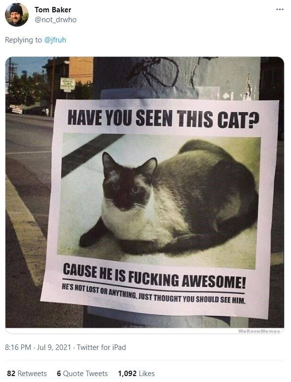 Cat - Tom Baker ... @not_drwho Replying to @jfruh HAVE YOU SEEN THIS CAT? CAUSE HE IS FUCKING AWESOME! HE'S NOT LOST OR ANYTHING, JUST THOUGHT YOU SHOULD SEE HIM. WeKnowMemes 8:16 PM · Jul 9, 2021 - Twitter for iPad 82 Retweets 6 Quote Tweets 1,092 Likes