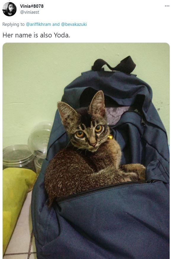 Cat - Vinia#8078 ... @viniaest Replying to @ariffikhram and @bevakazuki Her name is also Yoda.