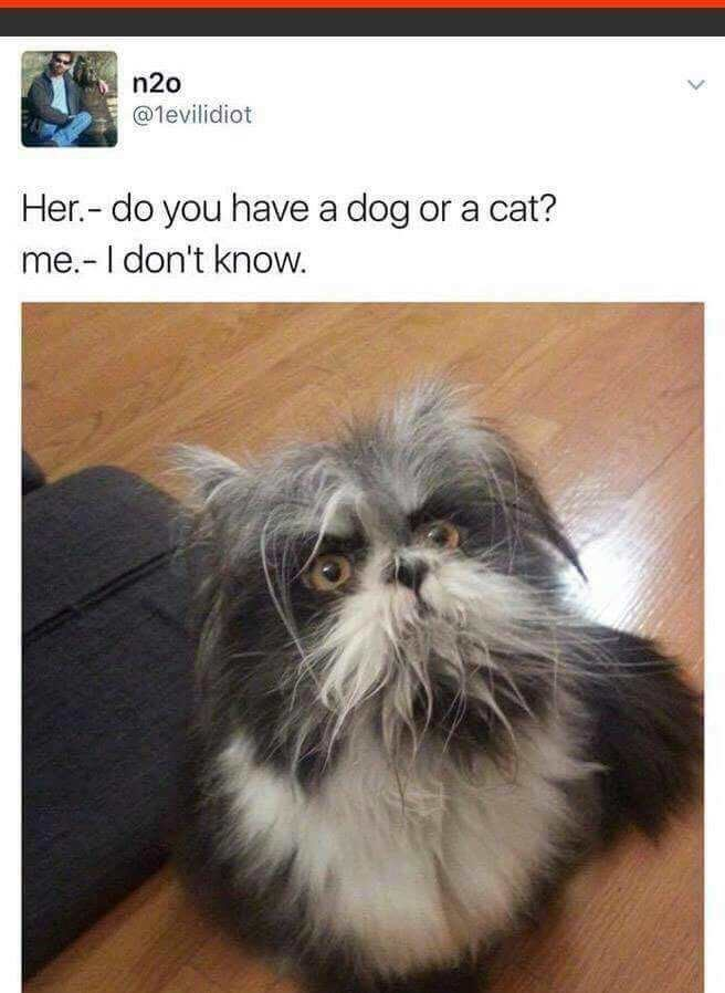 Cat - n2o @levilidiot Her.- do you have a dog or a cat? me.-I don't know.