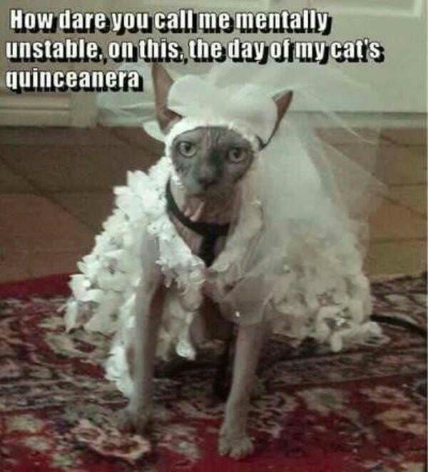 Dog breed - How dare you call me mentally unstable, on this., the day of my cat's quinceanera