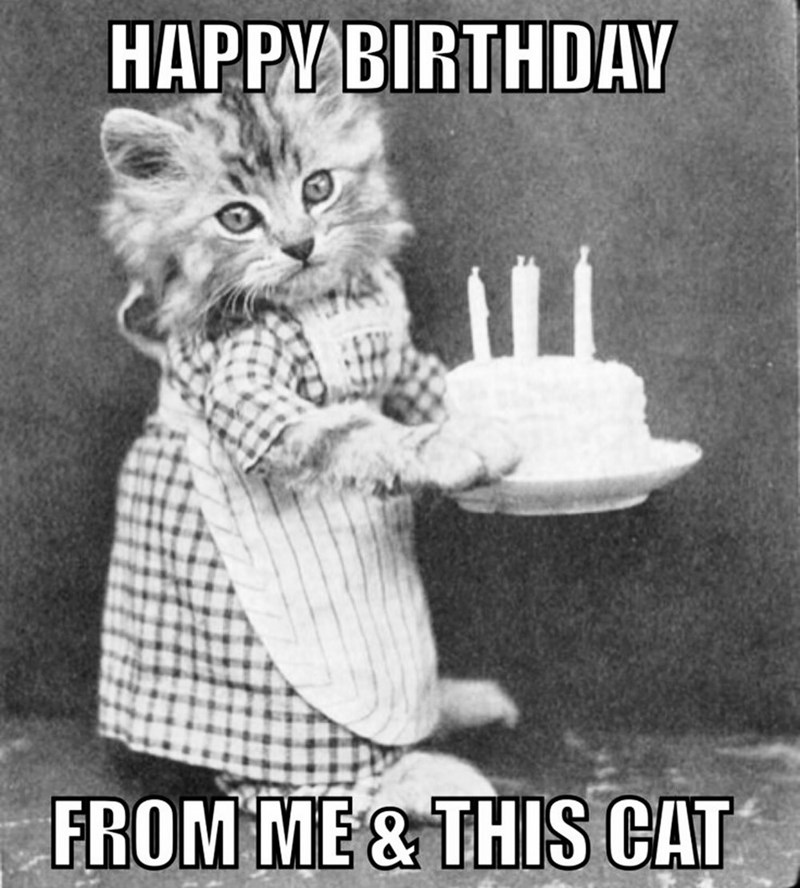 Cat - HAPPY BIRTHDAY FROM ME & THIS CAT