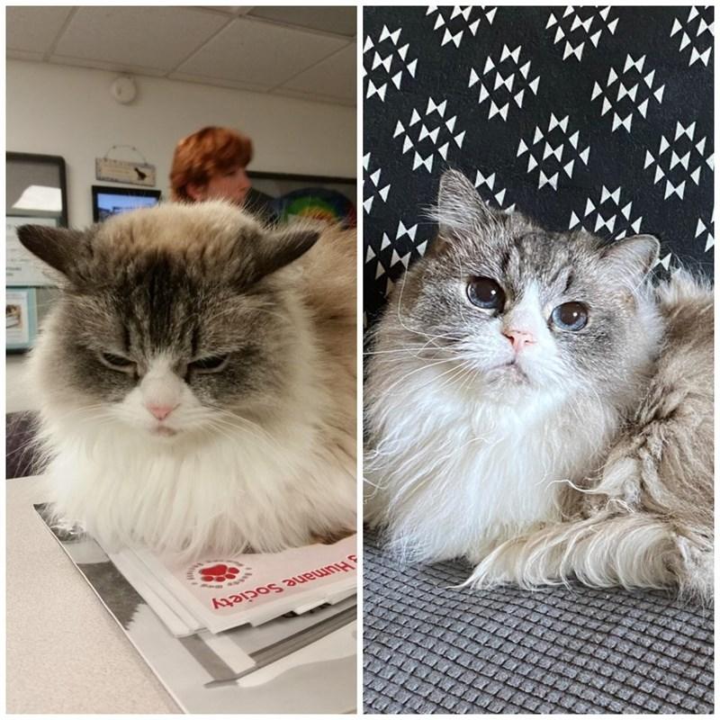 Cat - Humane Society