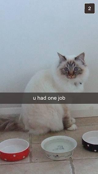 Cat - 2 u had one job