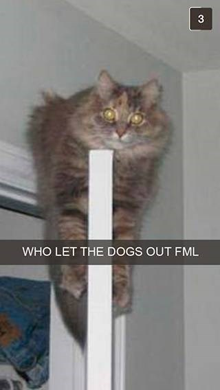 Cat - 3 WHO LET THE DOGS OUT FML