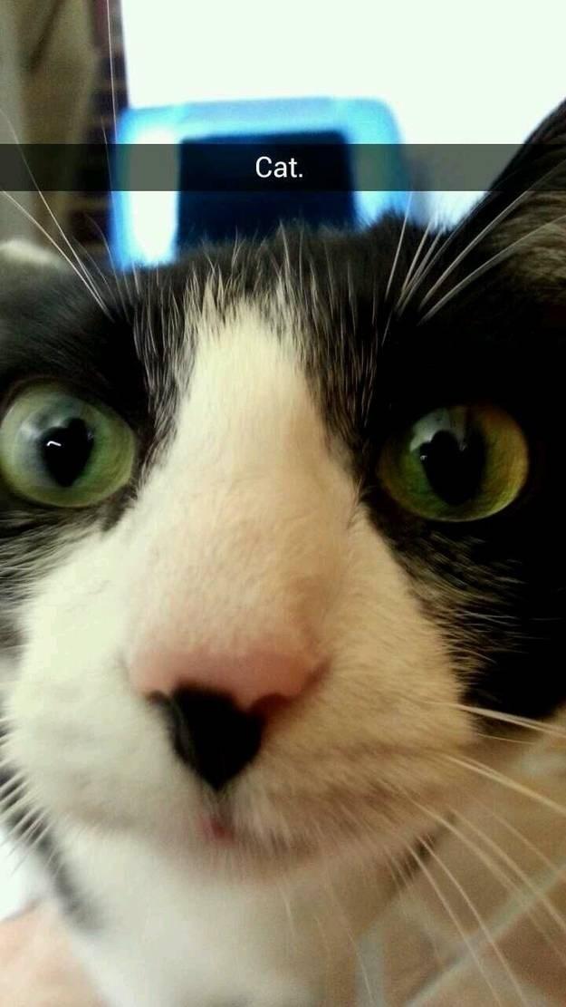 Head - Cat.