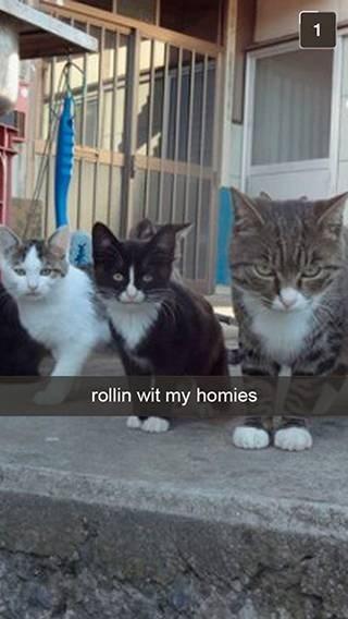Cat - rollin wit my homies