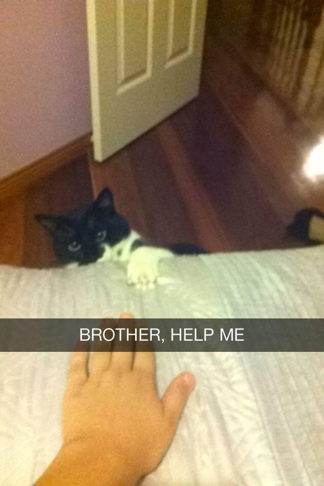 Cat - BROTHER, HELP ME