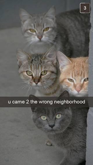 Cat - 3 u came 2 the wrong neighborhood