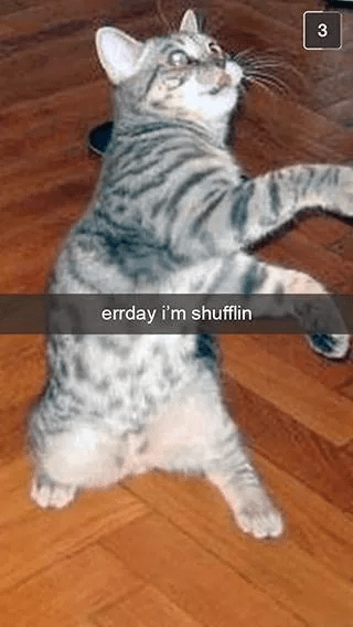 Cat - 3 errday i'm shufflin