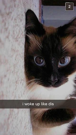Cat - i woke up like dis
