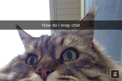 Cat - How do I snap chat 16