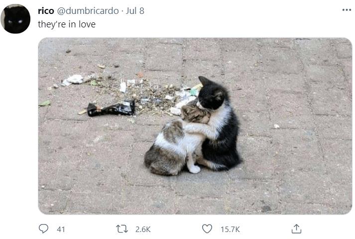 Cat - rico @dumbricardo · Jul 8 ... they're in love O 41 L7 2.6K 15.7K