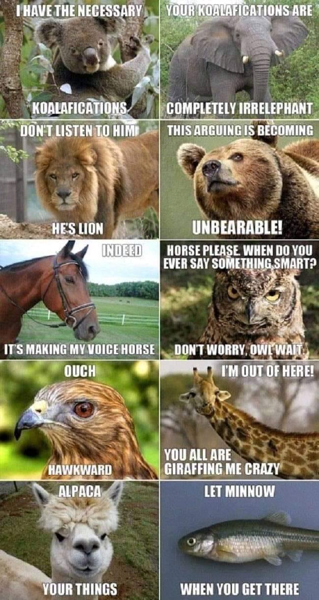 Photograph - I HAVE THE NECESSARY YOUR KOALAFICATIONS ARE KOALAFICATIONS COMPLETELY IRRELEPHANT THIS ARGUING IS BECOMING DON'T LISTEN TO HIM HE'S LION UNBEARABLE! INDEED HORSE PLEASE WHEN DO YOU EVER SAY SOMETHING SMART? DON'T WORRY, OWL WAIT I'M OUT OF HERE! IT'S MAKING MY VOICE HORSE OUCH HAWKWARD YOU ALL ARE GIRAFFING ME CRAZY ALPACA LET MINNOW YOUR THINGS WHEN YOU GET THERE