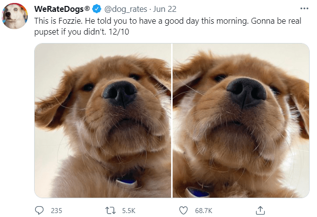 Dog - WeRateDogs® O @dog_rates · Jun 22 This is Fozzie. He told you to have a good day this morning. Gonna be real pupset if you didn't. 12/10 235 17 5.5K 68.7K