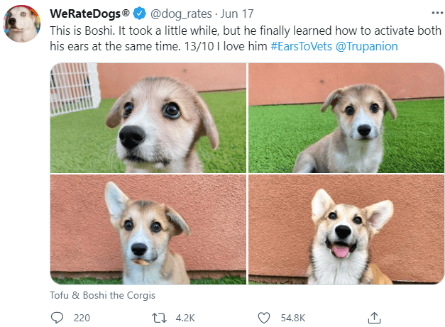 Dog - WeRateDogs® O @dog_rates · Jun 17 This is Boshi. It took a little while, but he finally learned how to activate both his ears at the same time. 13/10I love him #EarsToVets @Trupanion ... Tofu & Boshi the Corgis 220 27 4.2K 54.8K