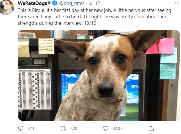 Dog - WeRateDogs® O @dog_rates · Jul 12 This is Birdie. It's her first day at her new job. A little nervous after seeing there aren't any cattle to herd. Thought she was pretty clear about her strengths during the interview. 13/10 ara 371 17 4.2K 82.3K