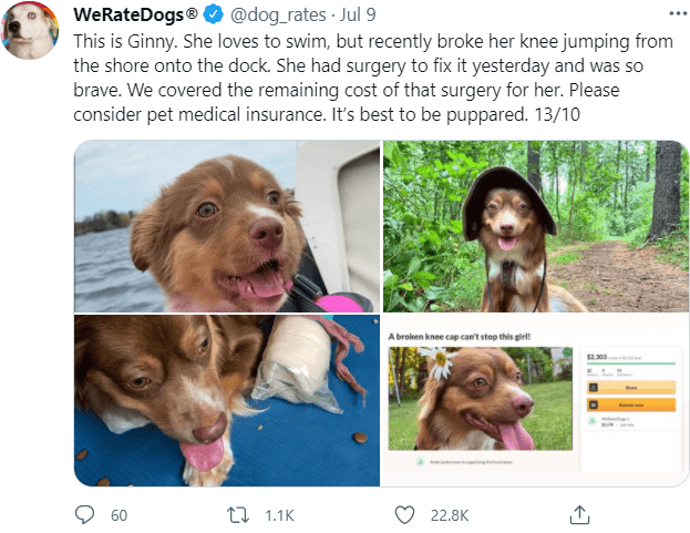 Dog - WeRateDogs® O @dog_rates · Jul 9 This is Ginny. She loves to swim, but recently broke her knee jumping from the shore onto the dock. She had surgery to fix it yesterday and was so brave. We covered the remaining cost of that surgery for her. Please consider pet medical insurance. It's best to be puppared. 13/10 A broken knee cap can't stop this girl! 60 17 1.1K 22.8K