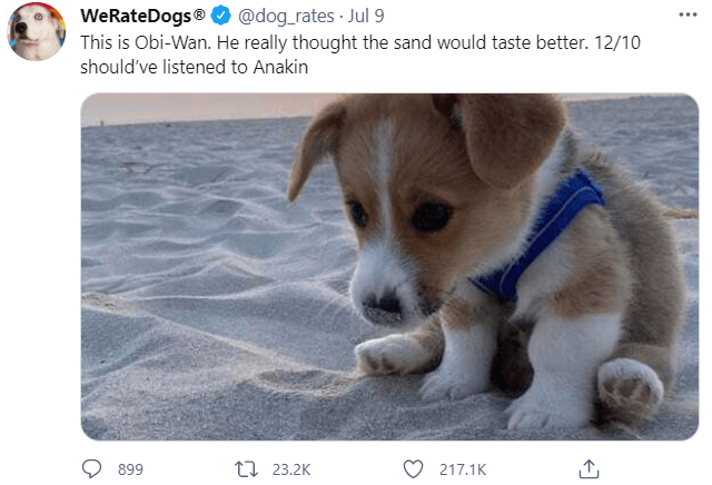 Dog - WeRateDogs® This is Obi-Wan. He really thought the sand would taste better. 12/10 @dog_rates Jul 9 ... should've listened to Anakin 899 17 23.2K 217.1K